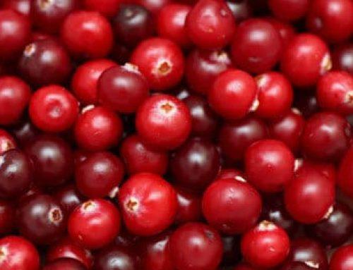 Voorkom infecties met cranberry's