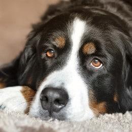 hond en hondenvoer